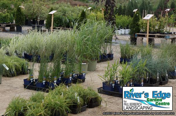 River's Edge Garden Centre, Paul Berberich Landscaping, Hanover Ontario,Walkerton Ontario, Landscape Ontario, Gery-Bruce, Perennial, Grasses